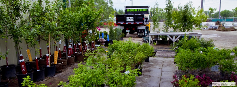Our Variety of Trees and Shrubs