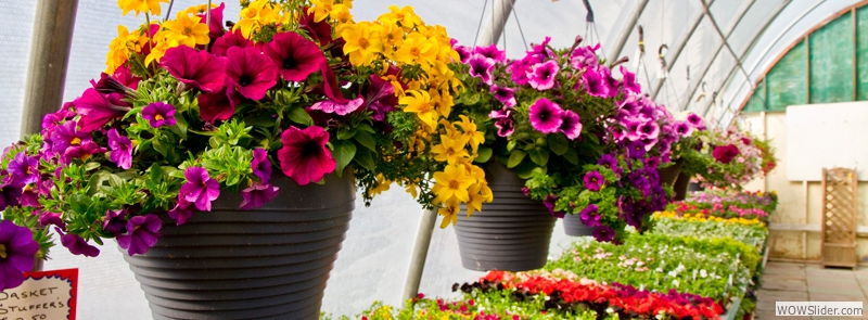 Our Variety of Hanging Baskets