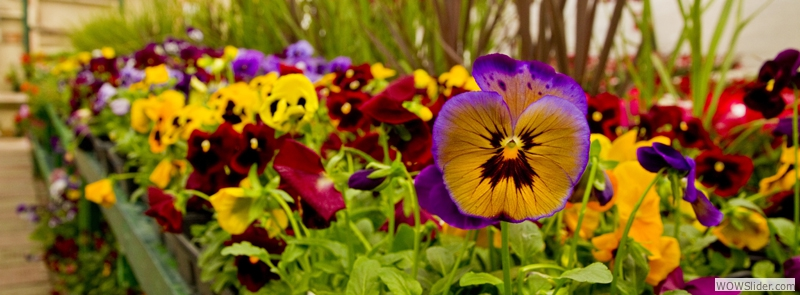 Check out our wide variety of annuals!