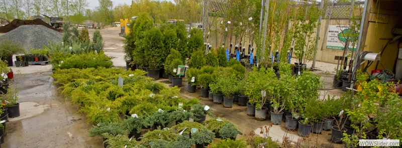 Check out our TREES AND SHRUBS, AND GARDEN CENTRE!