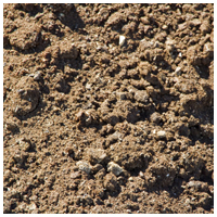Compost Manure